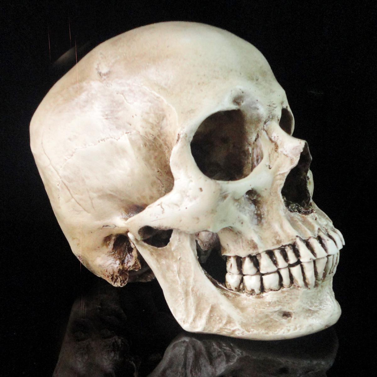 Fish Tank Ornament Human Skull