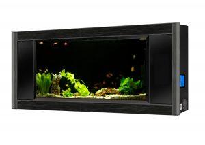 wall-fish-mount