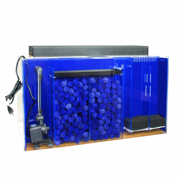 60-gallon-aquarium