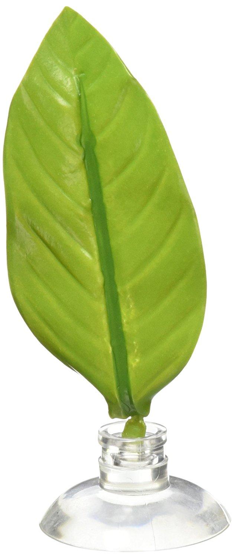 betta leaf hammock