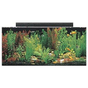 40-gallon-acrylic-aquarium-kit