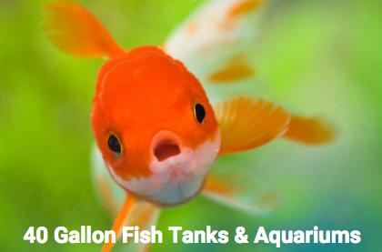 40-gallon-fish-aquarium