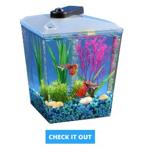 corner-fish-2-gallon