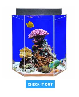 hexagon-fish-tank-55