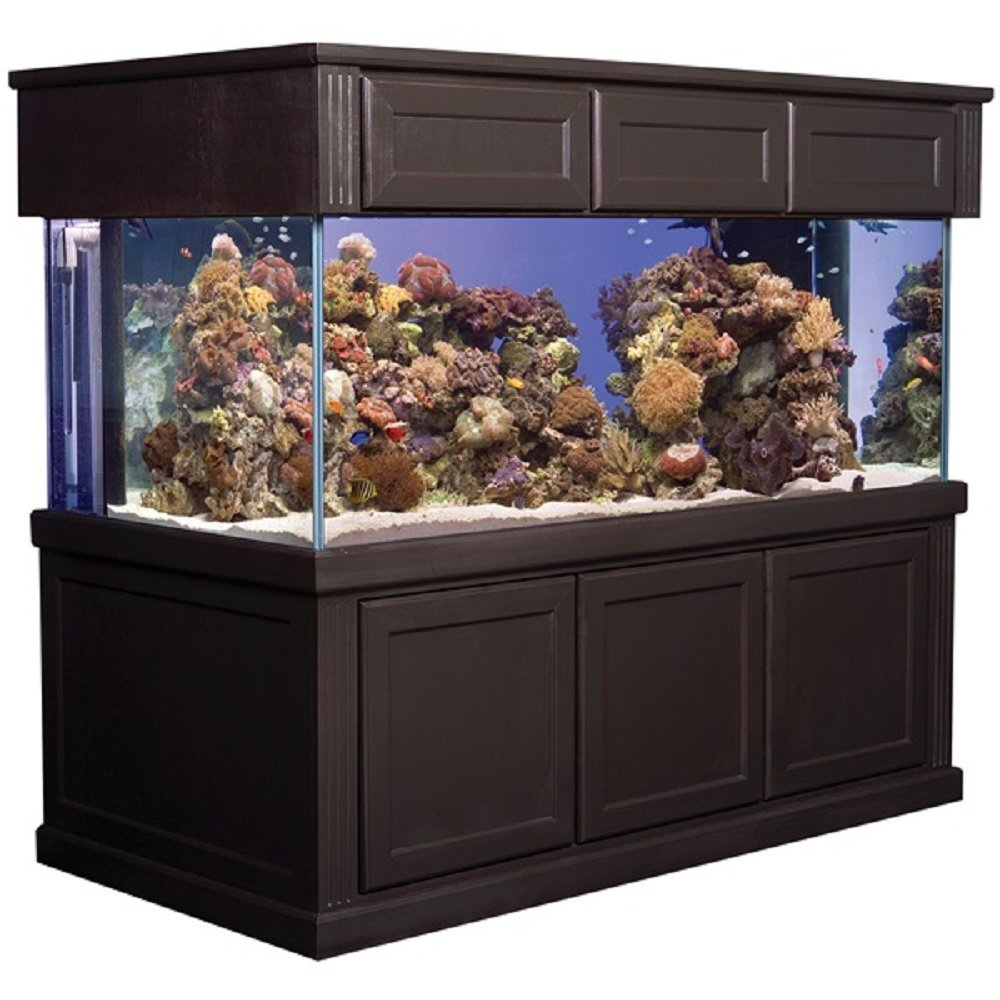 how to clean debris from fish tank with solution