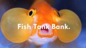 fish tanks & aquariums