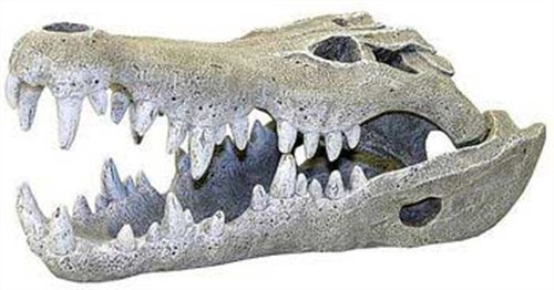 crocodile skull decor