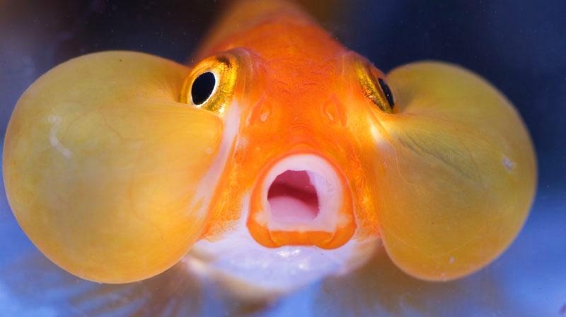 fish tank bank