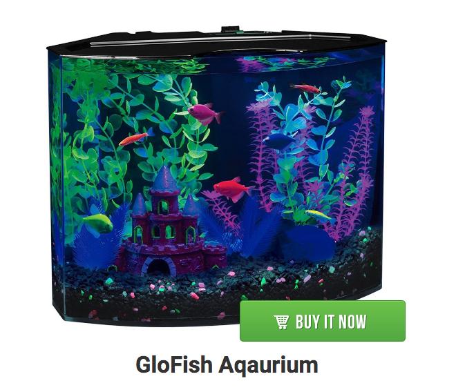 glofish aquarium
