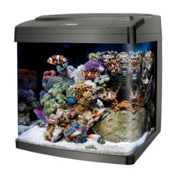 35 Gallon Aquarium Dimensions 1000 Aquarium Ideas