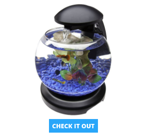 tetra-globe-fish-tank