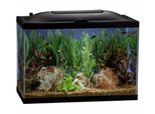 20 gallon fish tanks aquariums kits stands for How many fish in a 20 gallon tank